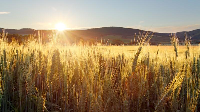 Online-dating-site für landwirte